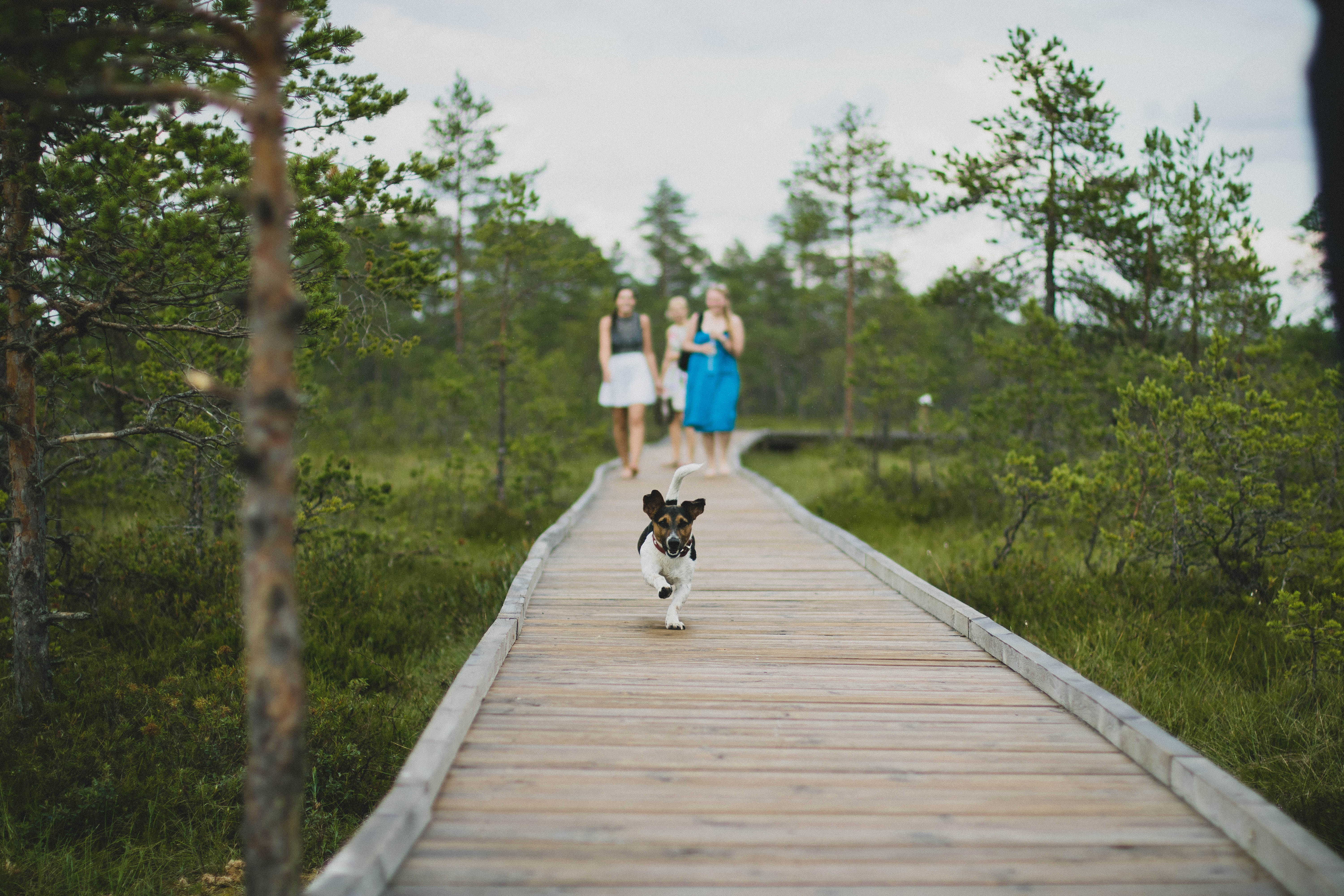 Dog running on bridge with people