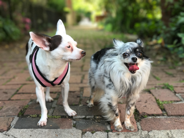 Meet Roo & Melford
