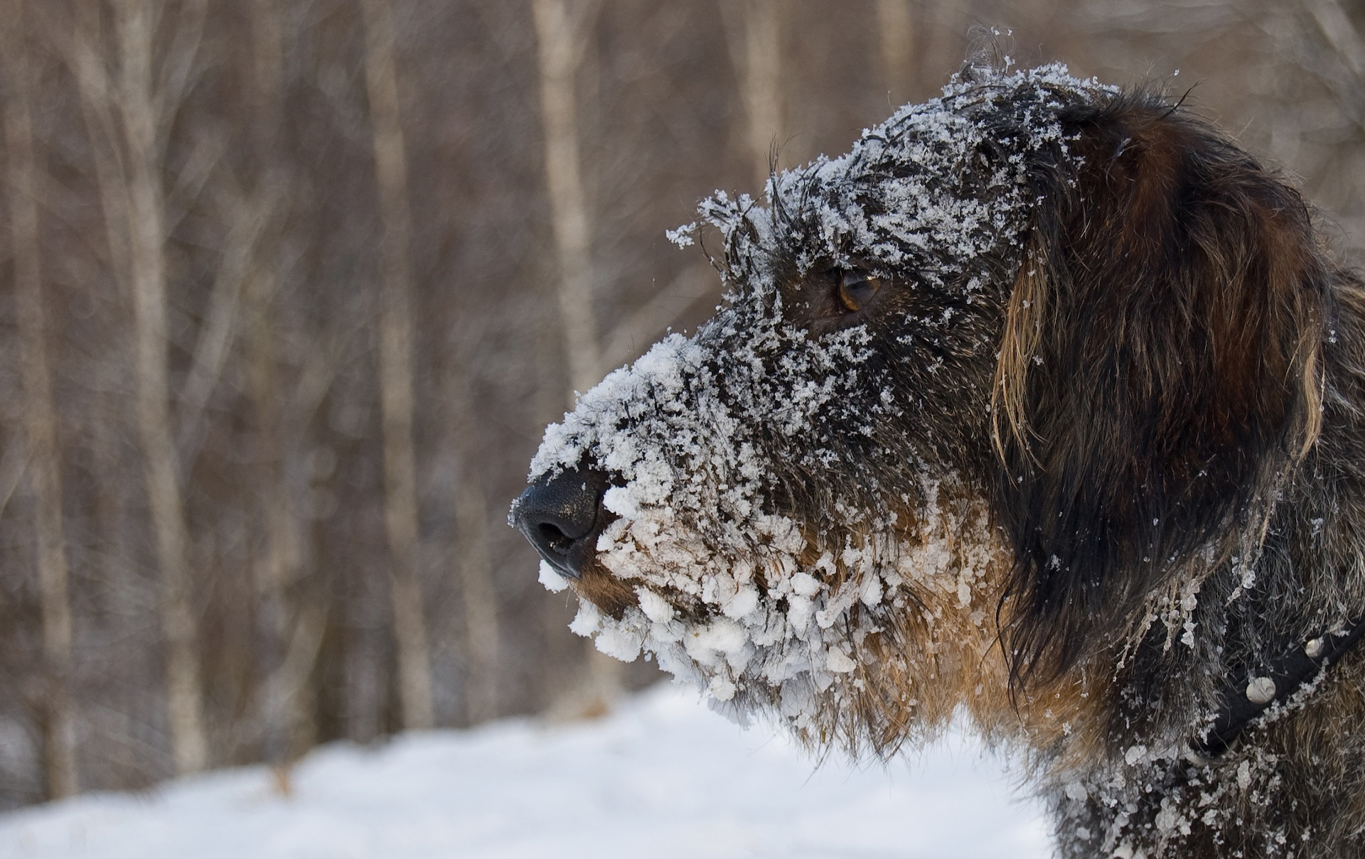 Is Ice Melt Bad for your Dog?