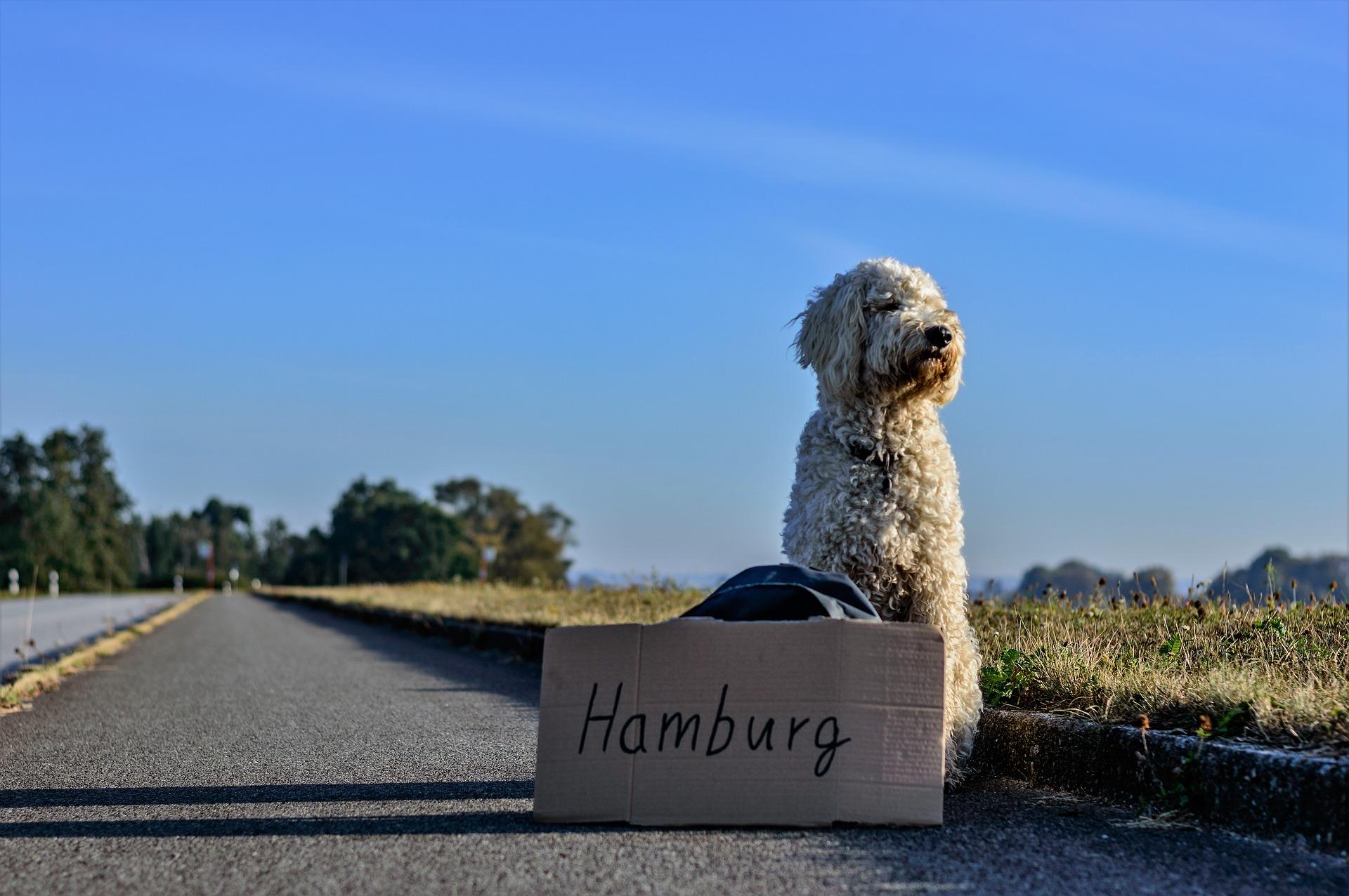 Doodle hitchhiking